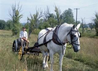 Floyd Ford still making hay the old fashion way N. G'town 1965 (1)