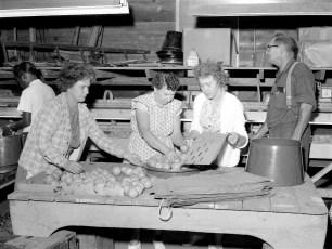 Lee Brown Farm Mt. Merino Packing Pears 1964 (2)