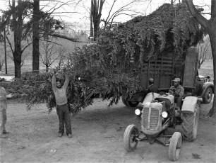 Ben Bartolotta Xmas Trees 1953 (7)