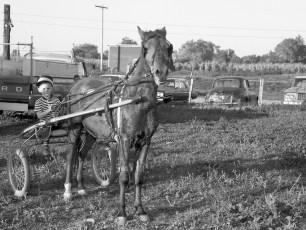 Hugo's Ranch harness races Livingston 1966 (3)