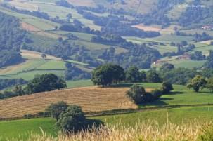 Paysage de collines près e Ostabat, 26 juin 2015