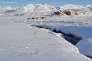 Chevaux et rivière gelée, Péninsule de Vatnsness, Islande