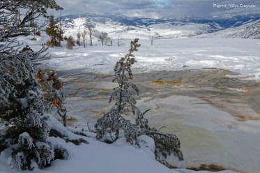 Upper terrace, Mammoth Hot Springs, Parc de Yellowstone, Etats-Unis, 24 janvier 2017