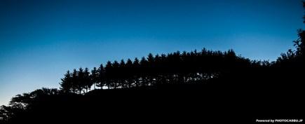 藍色に染まる木々