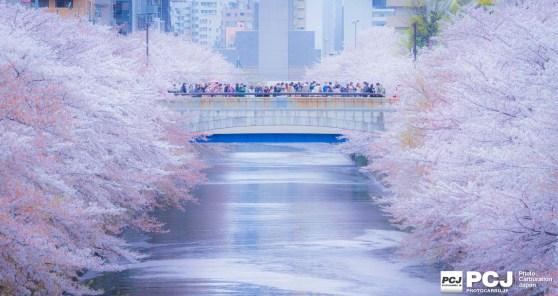 花筏を眺める人々
