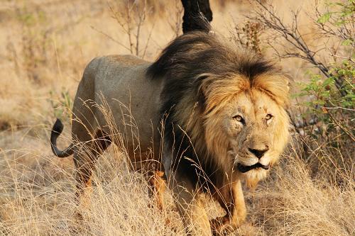 南非國家公園:野生動物天堂-搜狐旅游