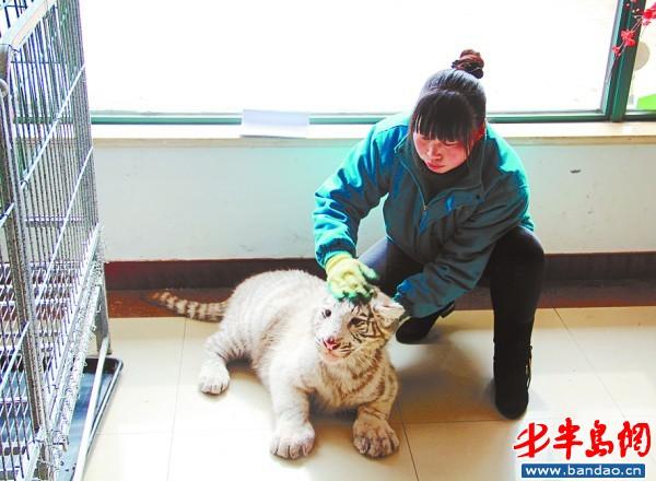 動物飼養員干一行愛一行 工作起來常忽視女兒(圖)-搜狐滾動