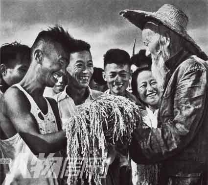 1958年,湖北孝感县号称亩产早稻2万斤的试验成功