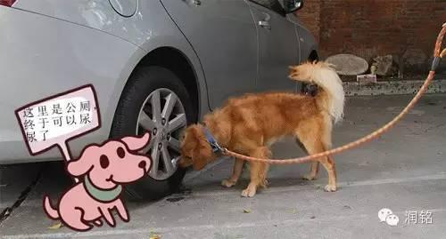 狗狗尿尿帶血怎么了-狗狗尿尿有血