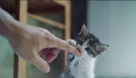 貓咬人圖片 _排行榜大全