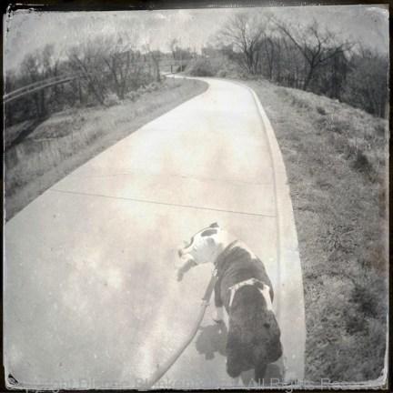 Dog headed into globe