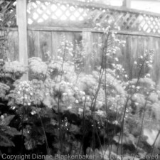 Photo 4: Foreground flowers in focus