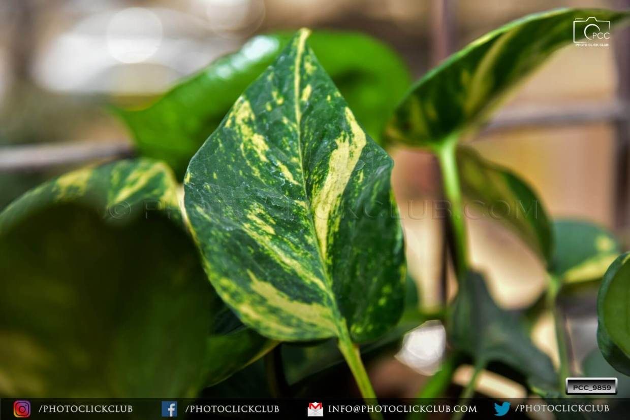 Nature Leaf - by photoclickclub