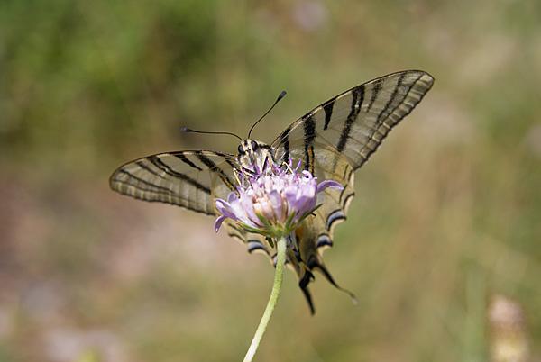 Butterfly 1680