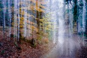 Adirondack road in the fall with motion blur