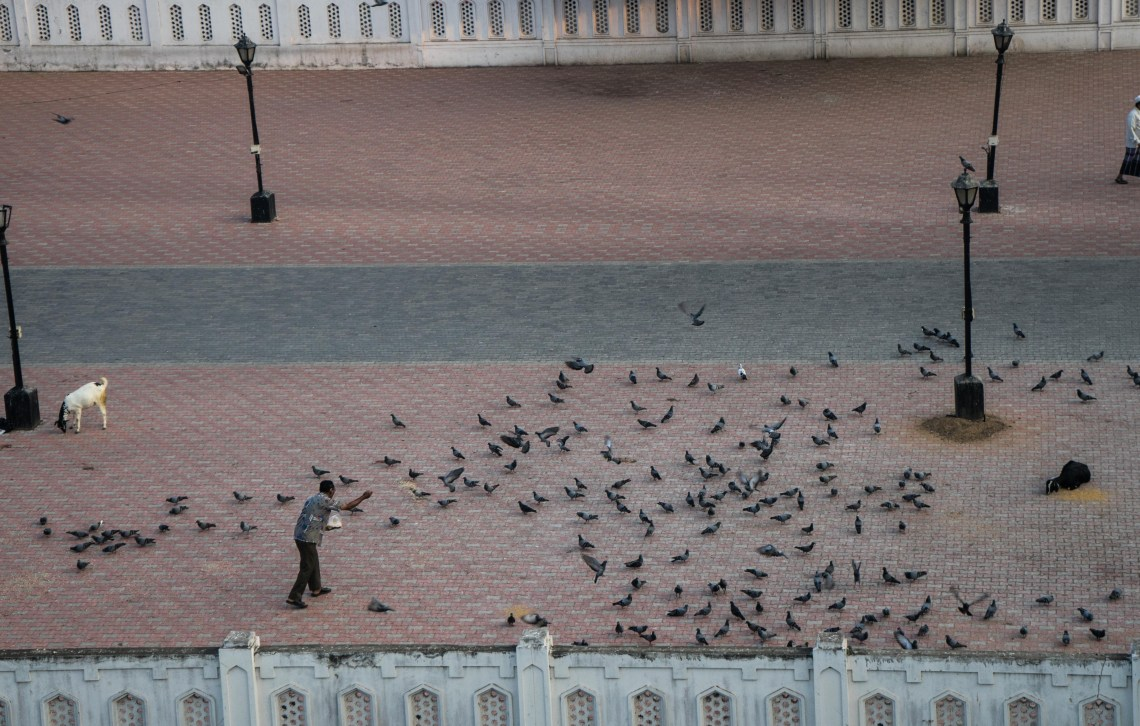 An old man feeding pigeons on a plaza in Chennai