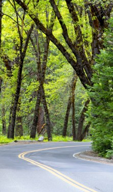 yosemite-winding-road-forest2