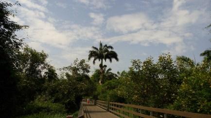 Camino en la Isla Santay