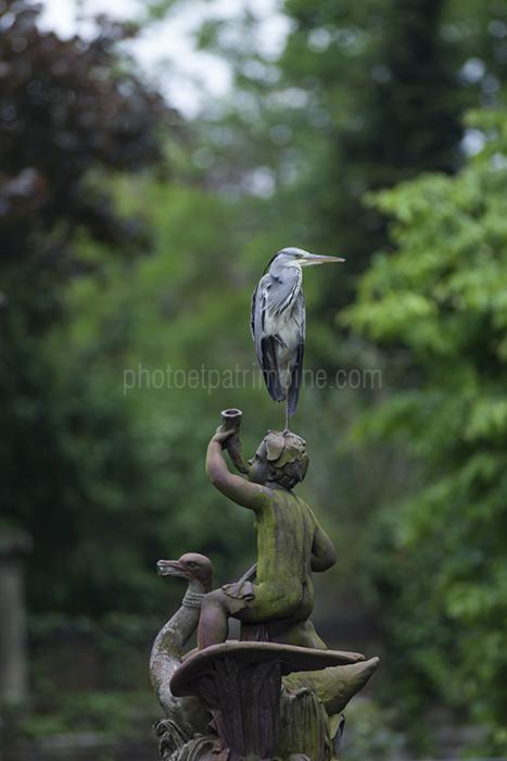 Sarreguemines, le héron du parc © Michel Bourguet