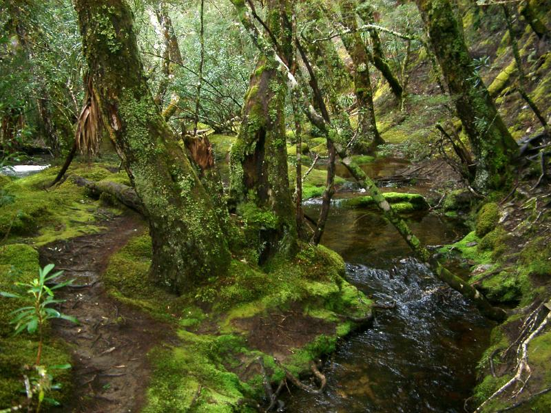 Fall Wooded Wallpaper Free Stock Photo Of Woodland Glade With A Mossy River