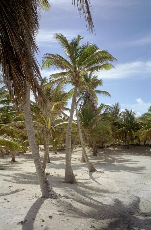 Free Stock photo of sunny palm grove  Photoeverywhere