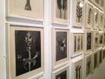 Le grand choc de cette année : l'expo sur les séries photographiques (pardon, les typologies, taxonomies et classements sériels) issus de la Walther Collection. On commence par les formes de la nature de Blossfeld.