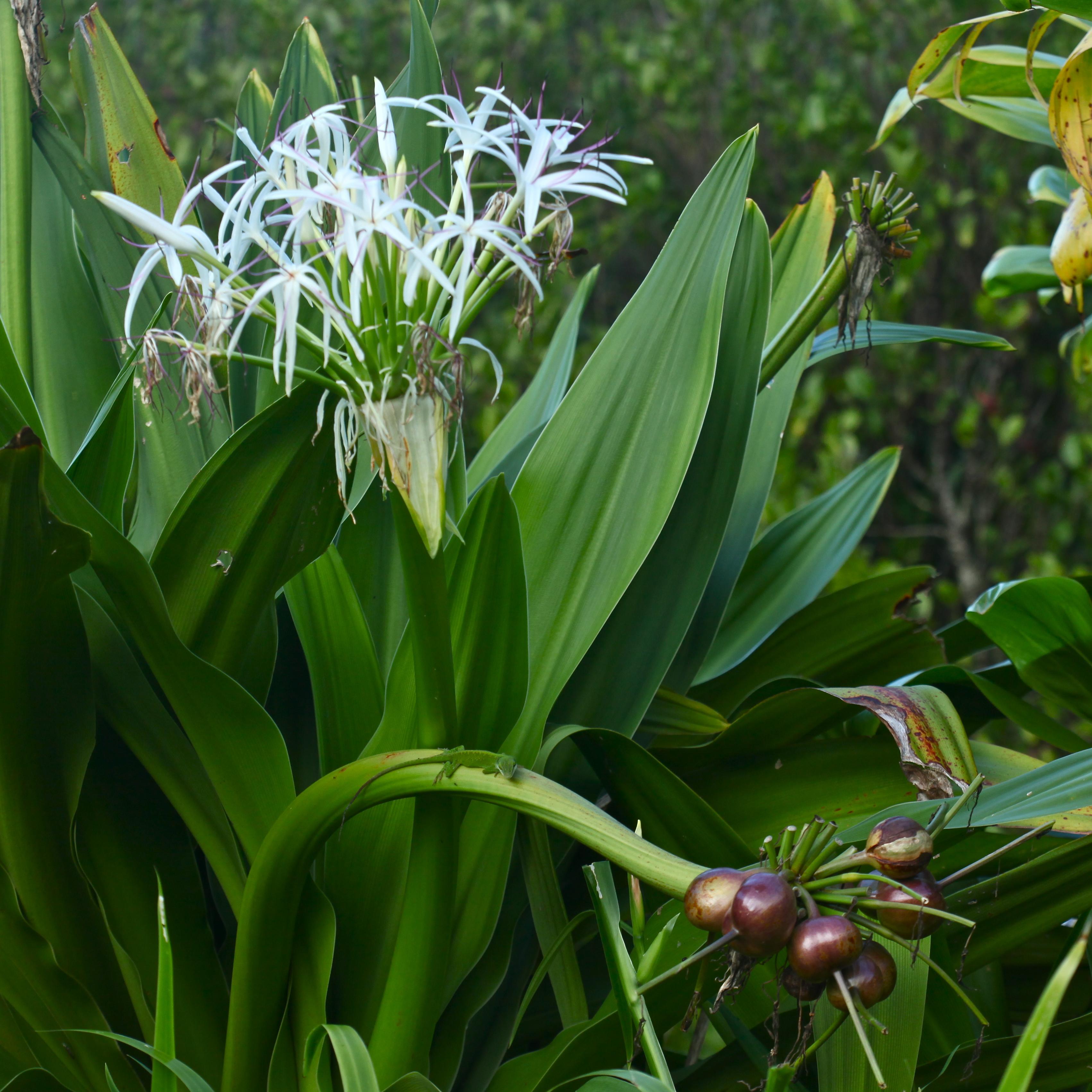 Limahuli Garden  Photo Flurries