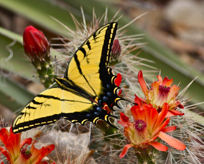 Cactus Flower Photo Flurries