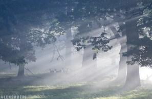 alexsaberi_forest