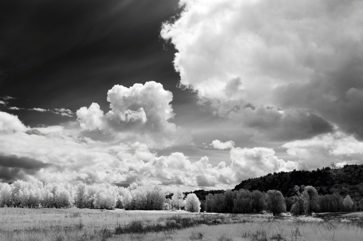 Infrared images can look amazing when processed in black-and-white.
