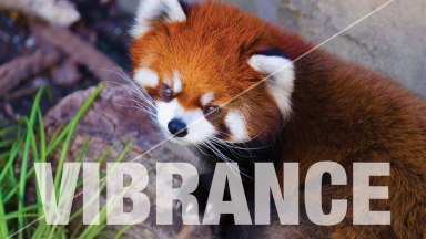 Understanding the Vibrance Command in Photoshop and Lightroom