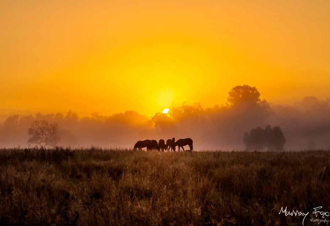 A Fresh Winter's Morning by Murray Fox