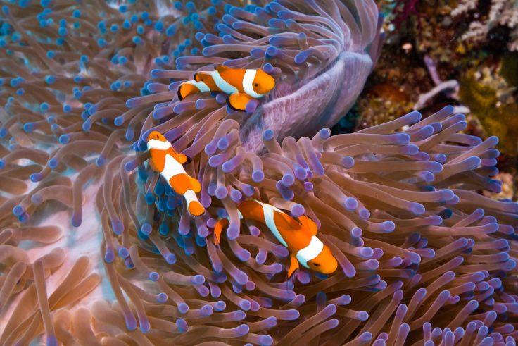 334:365 alt Nemo by Brent Schnarr