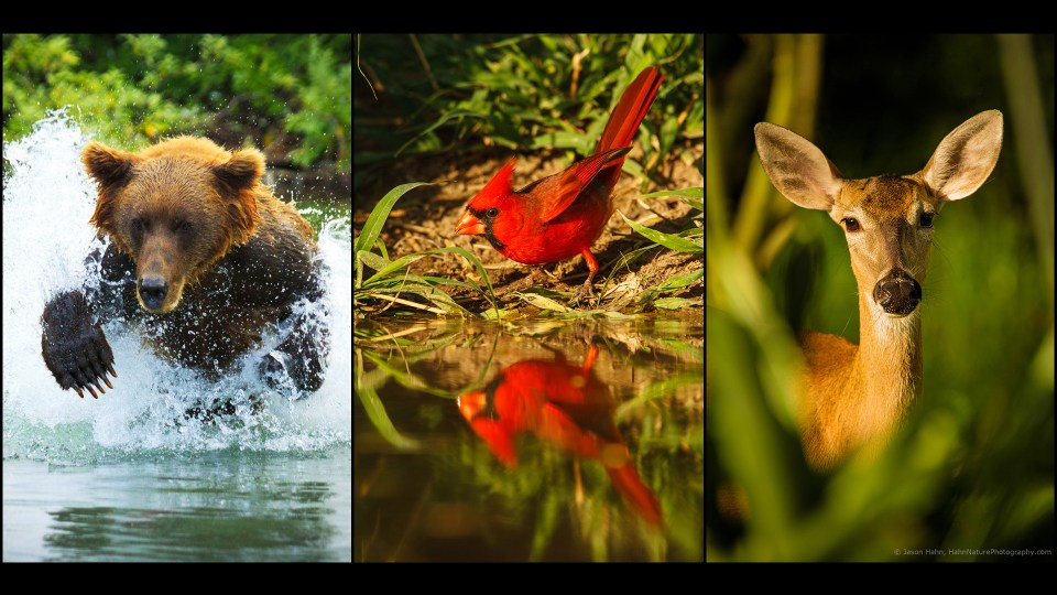 9 Tips to Put More Life into Your Wildlife Photos