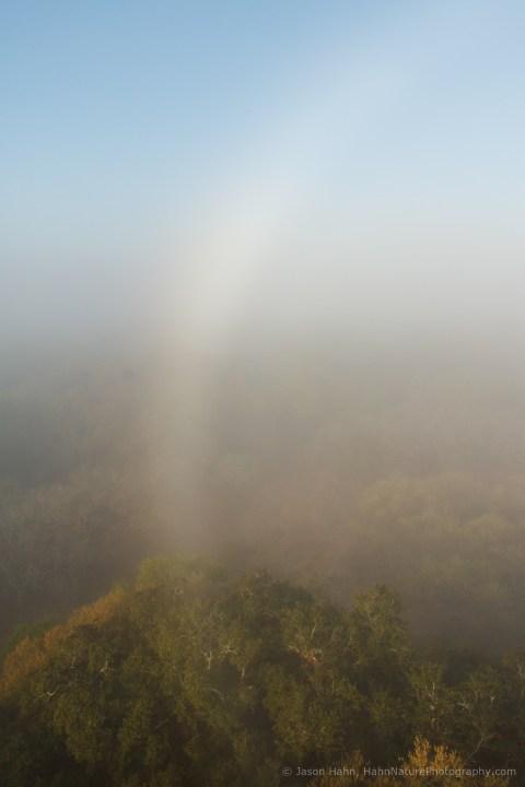 Fogbow Over Florida