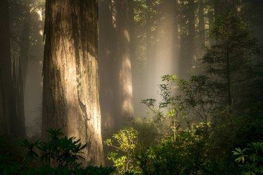 2016-09-16_NorthernCalifornia_Redwoods_1137
