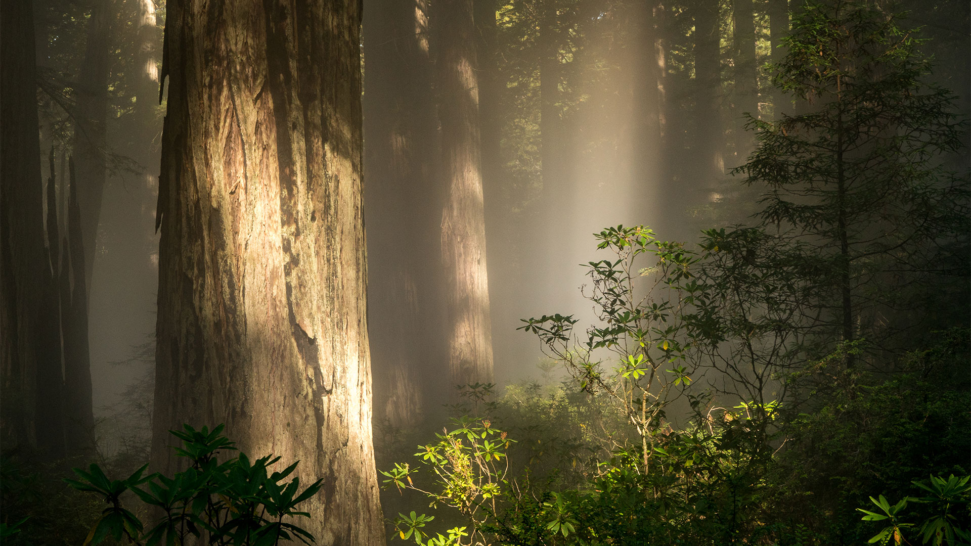 I Snuck Away from my Job to Photograph Redwood National Park