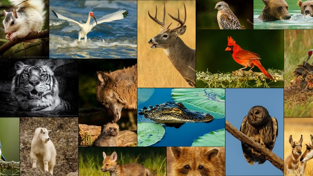 Photographing Wildlife Up Close... the Right Way