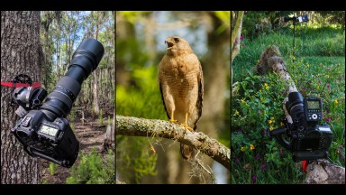 Wildlife Photography and Video with the Platypod Ultra