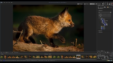 ACDSee Ultimate 10 – How To Get Your Photos Organized With Categories