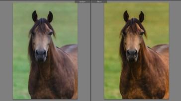 jhahn-lowres-colorcalib-horse1