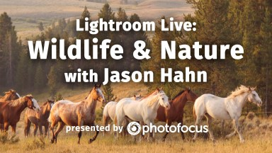 Lightroom Live: Wildlife & Nature with Jason Hahn