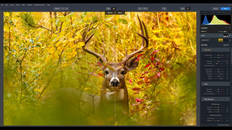 How to Finish Your Wild Animal Photos With Tone Mapping