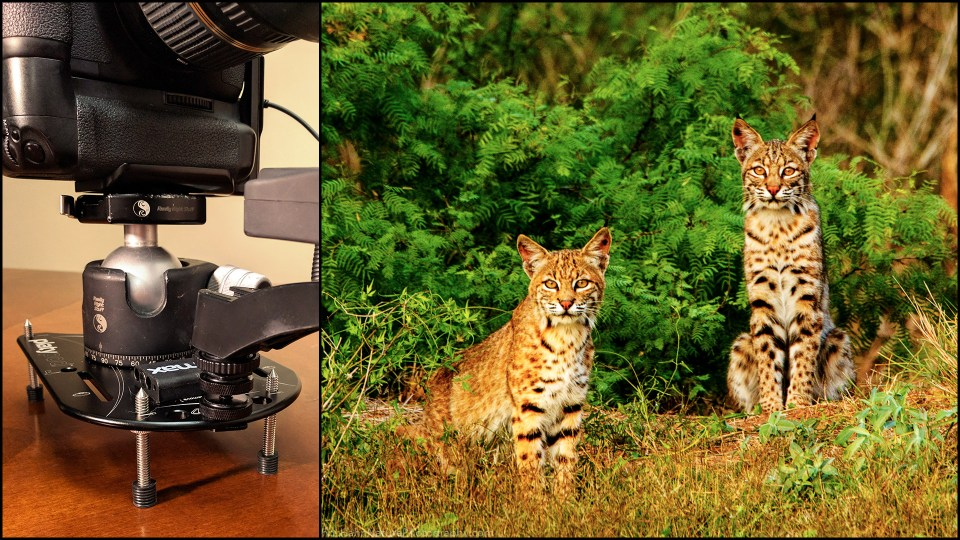 Get Ready to Remote, Part 1: Simple Camera Traps For Wildlife