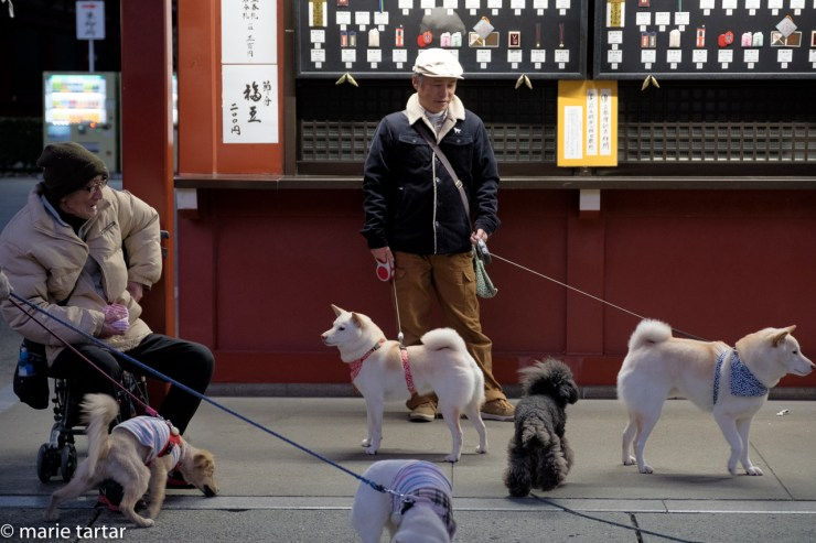 Pre-dawn dogowners visiting at Sensō-ji Buddhist Temple in Tokyo