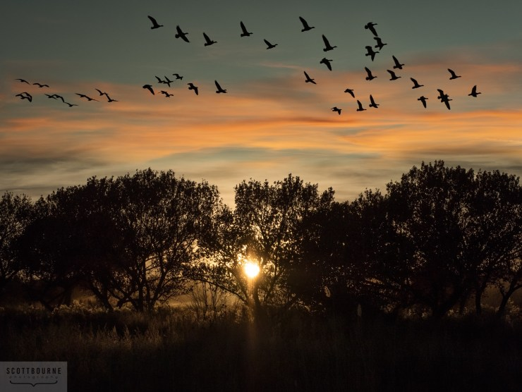 On the wing at sunset. Photo by Scott Bourne