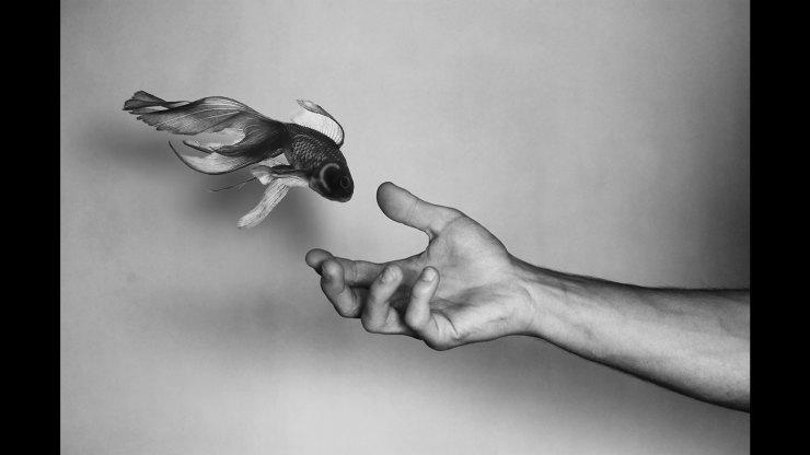 Goldfish and hand