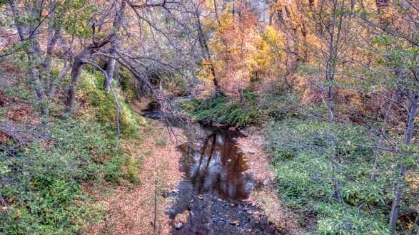 Fall color in West Fork of Oak Creek in Northern Arizona near Sedona