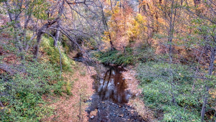 Fall color in West Fork of Oak Creek in Northern Arizona near Sedona