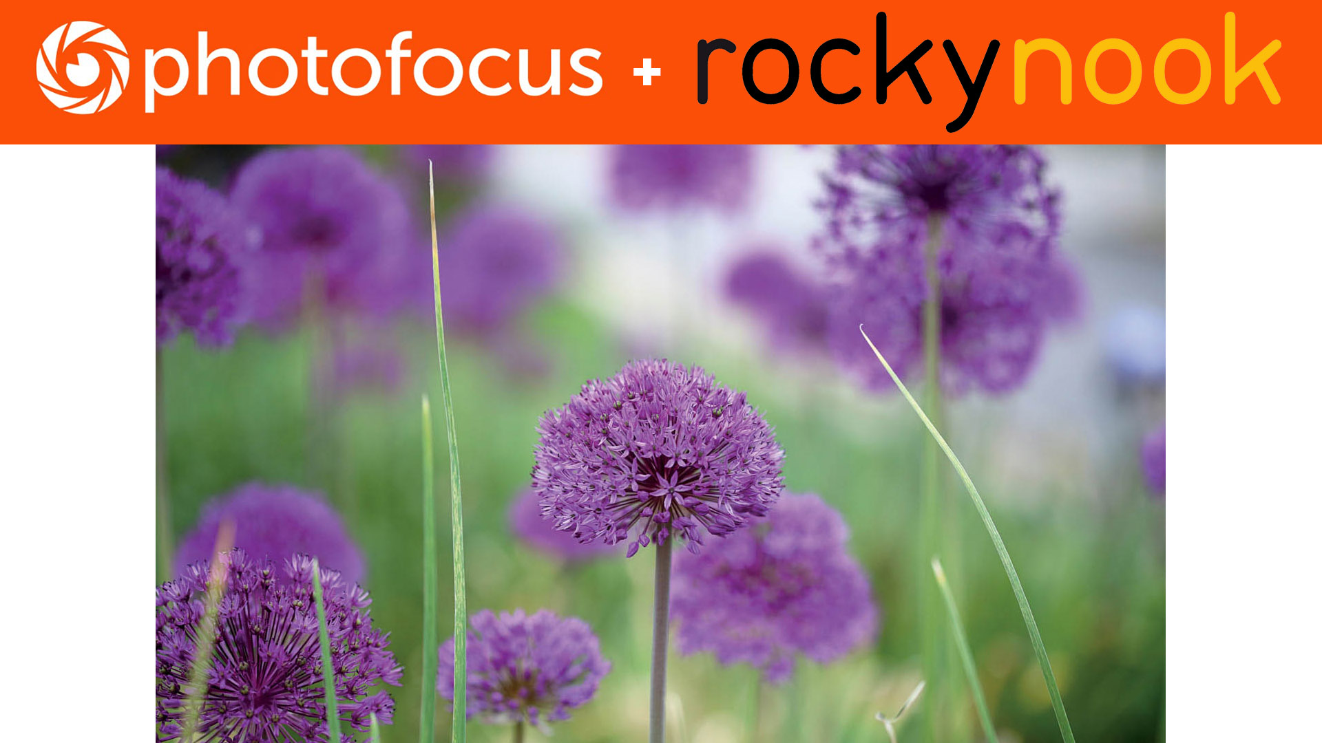 Photofocus + Rocky Nook Enthusiast's Guides Composition Fill the frame